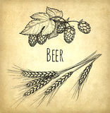 Hops and malt Stock Photography