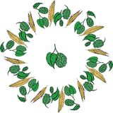 Hops and malt frame. Perfect for seasonal, autumn, octoberfest design stock illustration