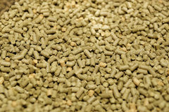 Hops pellets used for brewing beer Stock Image