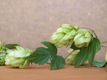 Hops Plant Royalty Free Stock Images