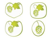 Hops plant Stock Images