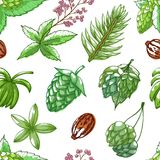 Hops seamless pattern vector illustration on white background royalty free illustration