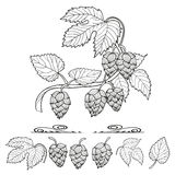 Hops set. Collection of hop decorative elements Royalty Free Stock Photo