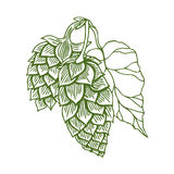 Hops vector visual graphic Royalty Free Stock Photos
