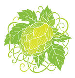 Hops vector Royalty Free Stock Photography