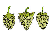 Hops vector visual graphic Stock Image