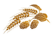Hops and wheat Royalty Free Stock Images