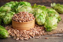 Hops and wheat Royalty Free Stock Photography
