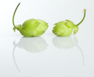 Hops on a white background Stock Photography