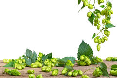 hops on the white background, Royalty Free Stock Image