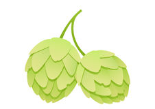 Hops on a white background Royalty Free Stock Photos