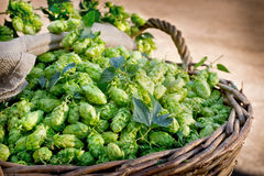 Hops in the wicker basket Royalty Free Stock Photography