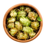Hops in wooden bowl on white background Stock Photo
