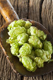 Hops on a wooden Shovel Royalty Free Stock Photos