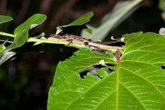 Hora de acostarse del lagarto Fotos de archivo