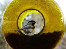 Hora de comer del pájaro Imágenes de archivo libres de regalías