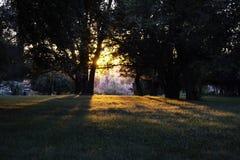 Hora de oro en el bosque trasero Fotografía de archivo