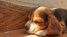 Hora para una siesta Foto de archivo libre de regalías