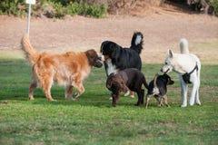 Hora social en el parque del perro imagen de archivo libre de regalías