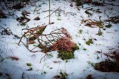 Horaire d'hiver dans la ville de Klaipeda photographie stock libre de droits