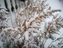 Horaire d'hiver dans le jardin photo stock