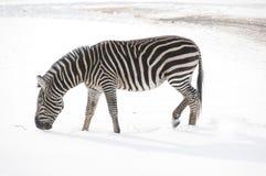 Horaire d'hiver dans le zoo Photos stock
