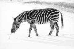Horaire d'hiver dans le zoo Photographie stock