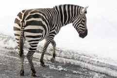 Horaire d'hiver dans le zoo Photo stock