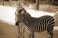 Horaire d'hiver dans le zoo Image stock