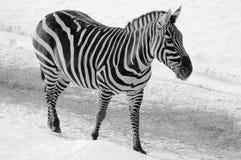Horaire d'hiver dans le zoo Photo libre de droits
