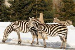 Horaire d'hiver dans le zoo Image libre de droits