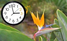 Horario de verano DST Reloj de pared que va invierno Dé vuelta al tiempo delantero imagen de archivo libre de regalías