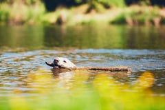 Horas de verão com cão Fotografia de Stock