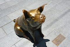 Horatio, das Schwein, in Adelaide, Süd-Australien Lizenzfreies Stockfoto