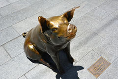 Horatio, the Pig, in Adelaide, South Australia Royalty Free Stock Photo