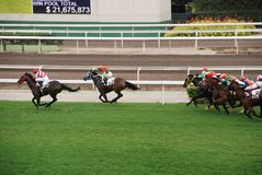 Horce che corre in Hong Kong Fotografie Stock Libere da Diritti
