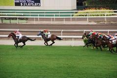 Horce die in Hong Kong rennen Royalty-vrije Stock Foto's