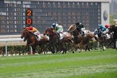 Horce que compete em Hong Kong Fotografia de Stock