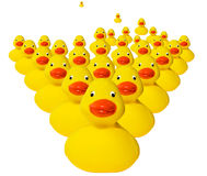 Horde of rubber duckies. Growing horde of typical plastic yellow rubber ducks Stock Photography