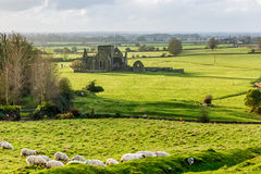 Hore Abbey in Cashel Stock Photos