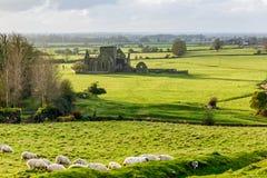 Hore abbotskloster i Cashel Arkivfoton