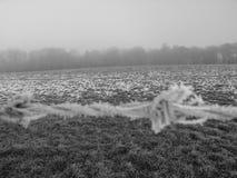 Hore-Frost stockfoto