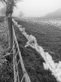 Hore-Frost stockfotografie