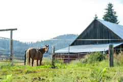 Hores at Barn. Horse at barn in Idaho Royalty Free Stock Photos