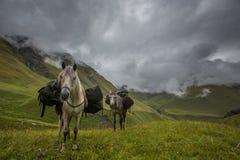 Hores in de bergen van de Kaukasus in Georgië Stock Foto's