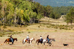 Horesback Riding Royalty Free Stock Image