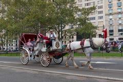 Horese和支架乘驾在纽约 库存照片