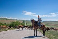 Horesman en koeien Stock Fotografie