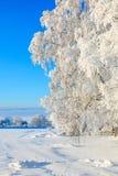Horfroast tree Stock Image