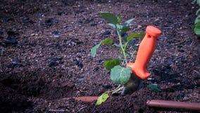 Hori Hori στο φυτικό κήπο Στοκ φωτογραφίες με δικαίωμα ελεύθερης χρήσης
